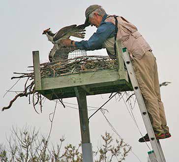 Edwin being retrieved from trap. Photo by John Ski.