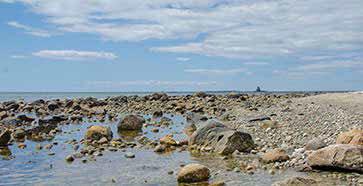 Crab habitat on South Beach, Fishers Island, NY. Photo by Terry McNamara.
