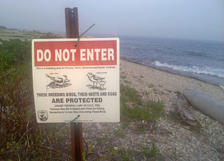 South Beach Protected Nesting Area